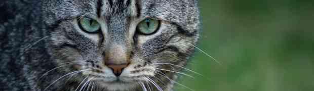Jak fotografować zwierzęta? 6 sposobów na lepsze ujęcia!